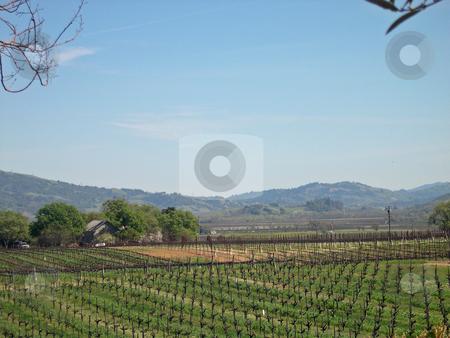 Vineyard in Sonoma stock photo, Vineyard in Sonoma California by Jaime Pharr