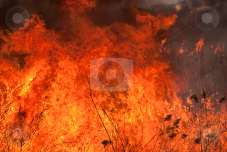 Burning flame stock photo, Big flame is on the nature by Alexey Rumyantsev