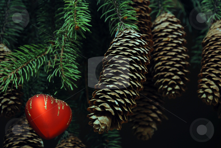 Heart on a branch stock photo, Heart on a branch of new year tree by Alexey Rumyantsev