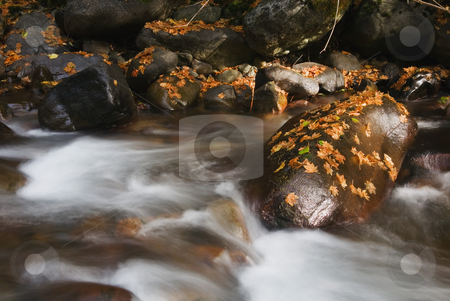 Traces of Fall stock photo, Autumn leaves rest upon the rocks near a small rushing stream in Washington by Mike Dawson