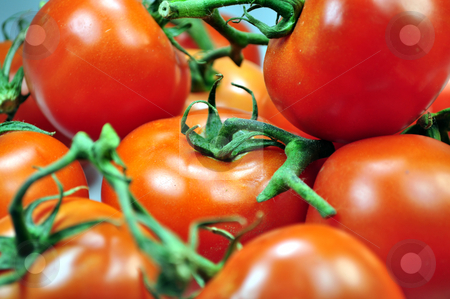 Tomatoes stock photo, Fresh vegetables: tomatoes by Fernando Barozza