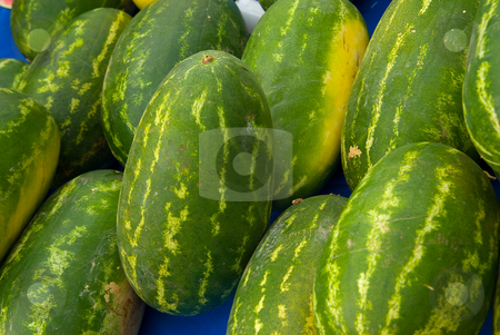 Wassermelone (Citrullus lanatus) - Watermelon stock photo, Die Wassermelone (Citrullus lanatus) ist eine aus Afrika stammende Nutzpflanze, die heute weltweit in warmen Regionen angebaut wird. Die Wildform wird auch Tsamma-Melone genannt. - Watermelon (Citrullus lanatus (Thunb.) Matsum & Nakai, family Cucurbitaceae) refers to both fruit and plant of a vine-like (climber and trailer) herb originally from southern Africa and one of the most common types of melon. by Wolfgang Heidasch