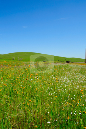 Spring Wildflowers And Rolling Hills stock photo, A field of small yellow and white flowers and a grassy hill in the background by Lynn Bendickson
