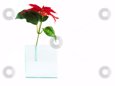 Red flower in translucent vase isolated on white  stock photo, Red flower in a translucent vase isolated on white, horizontal orientation by Vladimir Koletic