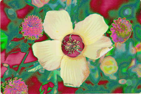 5 Petals 1 stock photo, Flower of 5 petals by Miguel Dominguez