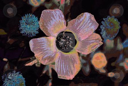 5 Petals 2 stock photo, Flower of 5 petals by Miguel Dominguez
