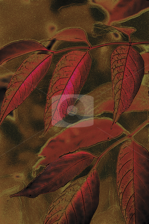 Autumn Leaves 1 stock photo, Autumn Leaves by Miguel Dominguez