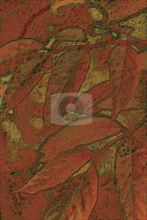 Autumn Leaves 2 stock photo, Autumn Leaves by Miguel Dominguez