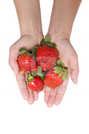 Strawberries in the hand stock photo, Woman hand olding some strawberry by Paulo Resende