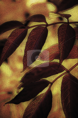 Autumn Leaves stock photo, Autumn Leaves by Miguel Dominguez