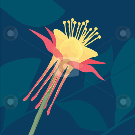 Columbine Flower stock vector clipart, Single flower head of the Red and Yellow Columbine, native to the pacific northwest. This is a botanical illustration. by Maggie Bates