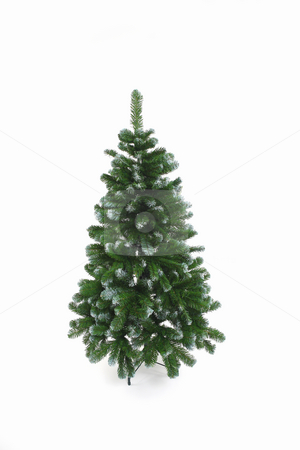 Christmas tree stock photo, Christmas tree without any decorations by Tom P.