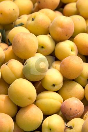 Apricots stock photo,  by Stefan Franz