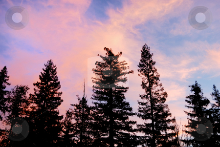 Purple Clouds at Sunset Above Trees Silhouettes stock photo, Purple clouds at sunset above tree silhouettes by Denis Radovanovic