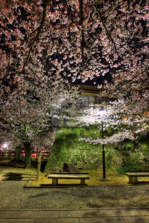 Sakura at night stock photo,  by Tomo Photography