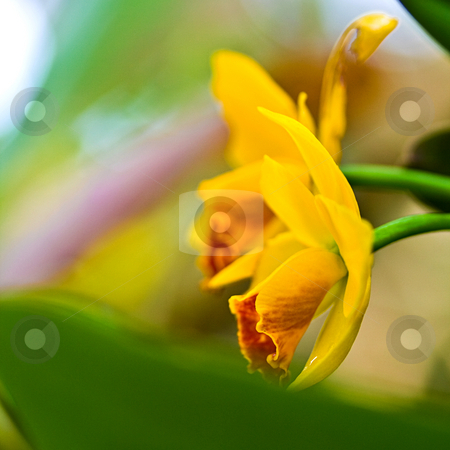 Orchid stock photo,  by Tomo Photography