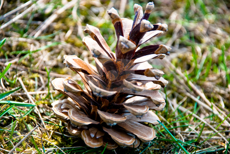 Cone stock photo, A cone on a grass by Alexey Rumyantsev