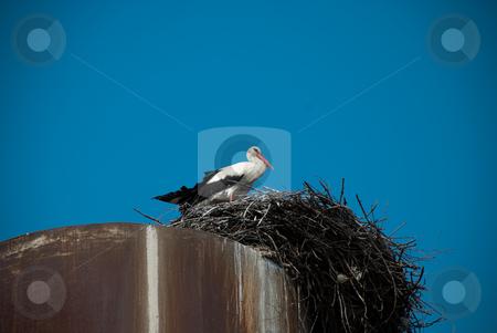 Stork stock photo, Stork in the nest by Alexey Rumyantsev