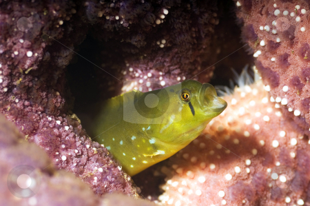Oooo Sole Miooo! stock photo, A penpoint gunnel belting out a tune. by Greg Amptman