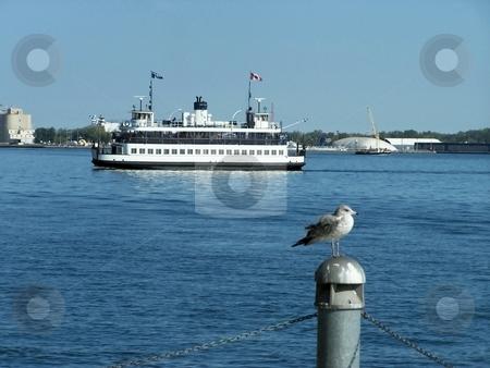 Water Ferry Crossing Lake stock photo, Large water ferry crossing lake Ontario during summer by CHERYL LAFOND