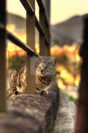 Stray cat stock photo,  by Tomo Photography