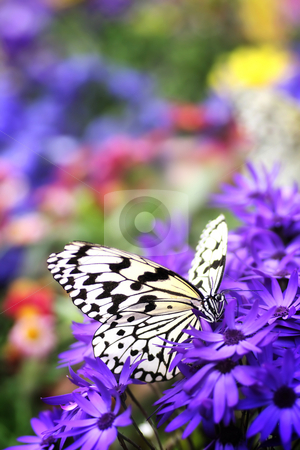 Paradise of butterfly stock photo,  by Tomo Photography