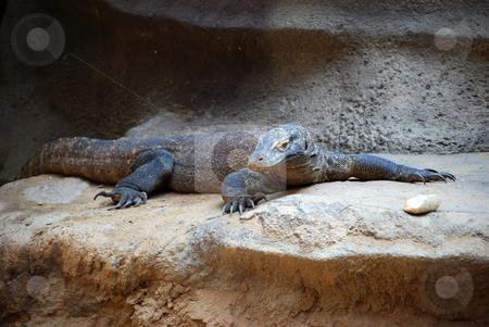 Dragon lizard stock photo,  by Sarka