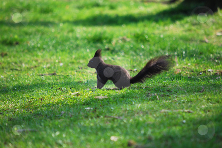 Squirrel stock photo,  by Sarka