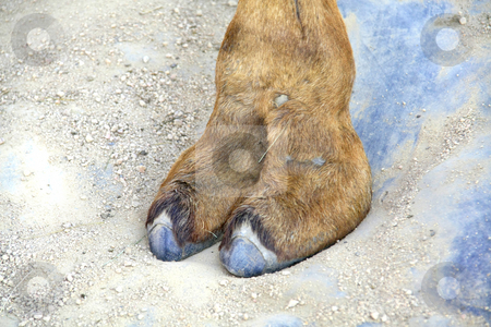 Camel toe stock photo, A beautiful camel toe / cameltoe by Chris Alleaume