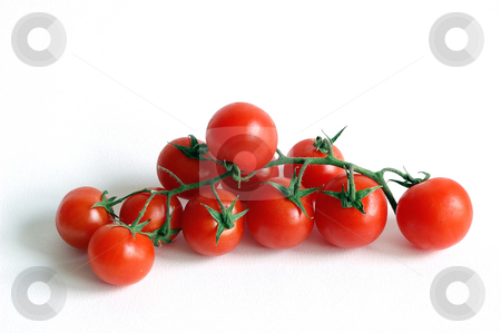 Tomatoes stock photo, Tomatoes bunch (pachino) over a white background by ALESSANDRO TERMIGNONE