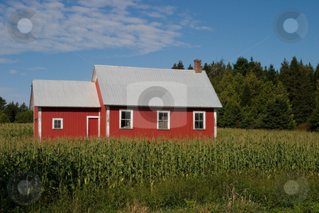 Old Red School House stock photo, An old red school house surrounded by a corn field - landscape. by Rick Parsons