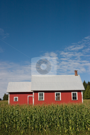 Old Red School House 2 stock photo, An old red school house surrounded by a corn field - portrait. by Rick Parsons