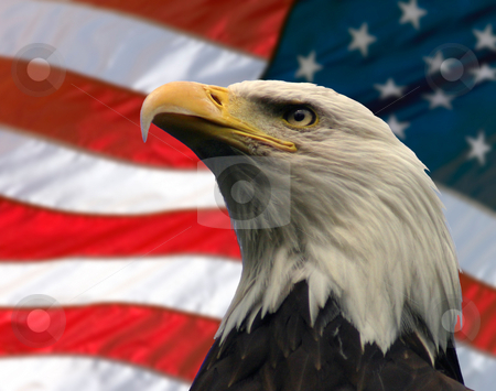 American Eagle stock photo, Double exposure:  Bald Eagle in the foreground with the American flag blurred in the background. by Rick Parsons