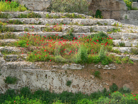 Poppies stock photo, Red poppies growing on a ledge of archaological ruins in greece by Casinozack