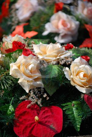 Roses stock photo,  by Sarka