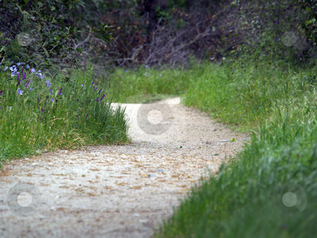 Low view of outdoor walking path green grass and flowers stock photo, Outdoor walking path green grass and wildflowers low angle by Jeff Cleveland