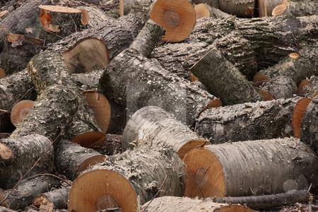 Fire logs stock photo, Pile of fresh cut firewood by R Deron