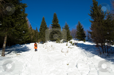 Winter mountain trekking stock photo, Winter trekking in a snowy mountain wood; Alps, Italy by Roberto Marinello