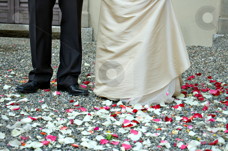 Marriage and roses stock photo, Petals of roses at the foot of the married couple by Roberto Marinello