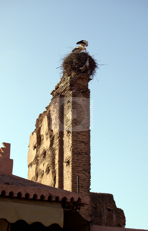 Storks in the nest stock photo, Storks in the nest over an old wall in Marrakesh by Roberto Marinello