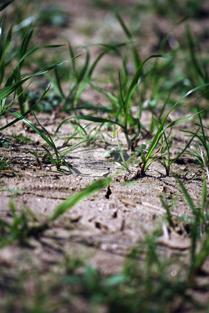 Dried ground stock photo, Detail of a structure od dried ground by Sarka