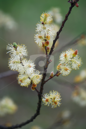 Tree stock photo, Picture of tree in spring by Sarka