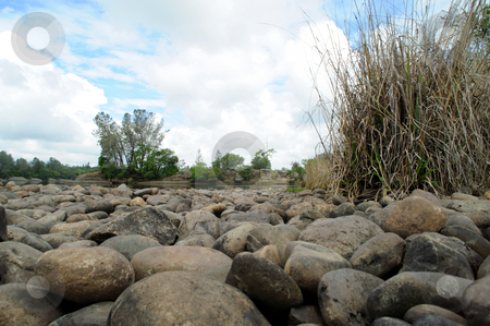 Small Animals Point Of View stock photo, River rocks and water as it would be viewed by a small animal. Wild grasses and trees in the shot on bright day. by Lynn Bendickson