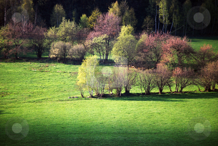 Trees in spring stock photo, Trees in spring by Sarka