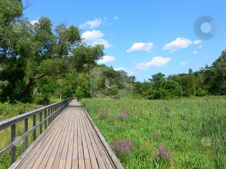 Wetland   stock photo, A wooden walkway trough the marsh in the conservation area in Hamilton. by Horst Petzold