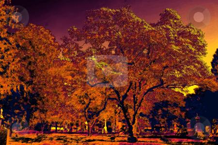 Trees stock photo,  by Andrew Kauffman