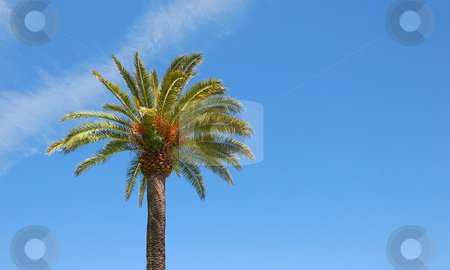 Sunlit Palm Tree stock photo, Sunlit palm tree with blue sky background and copy space to the right. by Denis Radovanovic