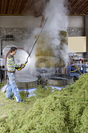Herbal essences distillery stock photo, The production process of distilling herbal essences, where the fresh herbs are pressure cooked to extract the perfume by Corepics VOF