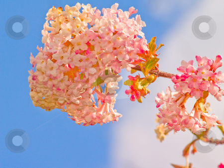 Pretty pink flower with the blue sky  stock photo, Pretty pink flower with the blue sky as background by Phillip Dyhr Hobbs