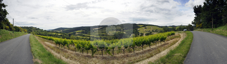 Vineyard stock photo, A panoramic image of a vineyard in the Cote du Rhone region in the Drome en Provence, France by Corepics VOF